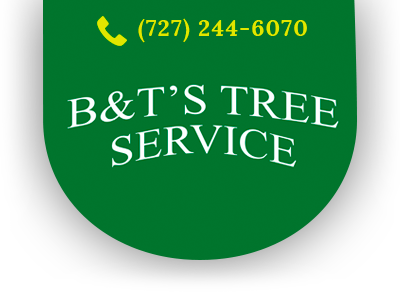 Pinellas Tree Services
