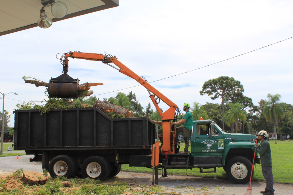 Tree Removal Palm Harbor Fl